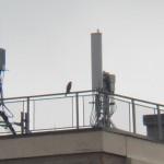 7-st-falcon-11-27-16