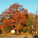 8-fall-tree-11-13-16