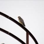 img_0005-hawkeye-falcon