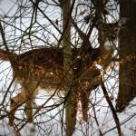 img_0006-deer