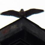 6-charlotte-wings-6-15-17