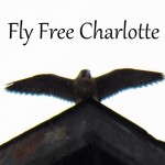 fly-free-charlotte-6-20-17