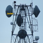 img_0018-juvie1