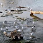 img_0073-gulls