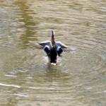 img_0076-quacker