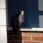 img_0080-bs-bird