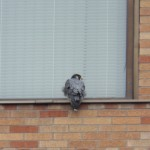 2-dss-falcon-11-26-17