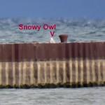 img_0008-001-summerville-pier