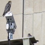 1-fledge-watch-beauty-6-11-18