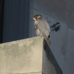 1-fledge-watch-beauty-6-16-18