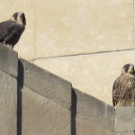 10-fledge-watch-mike-sundara-6-16-18