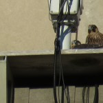 12-fledge-watch-beauty-all-3-6-14-18