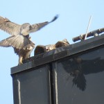12-fledge-watch-beauty-letchworth-sundara-6-21-18