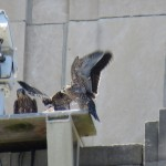13-fledge-watch-all-3-6-12-18