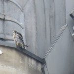 13-fledge-watch-dc-6-13-18