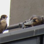 15-fledge-watch-beauty-mike-6-21-18