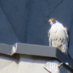 16-fledge-watch-dc-6-16-18