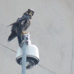 19-fledge-watch-wet-beauty-6-13-18