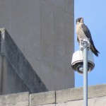 2-fledge-watch-beauty-6-10-18