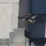 21-fledge-watch-beauty-6-15-18
