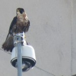 21-fledge-watch-wet-beauty-6-13-18