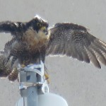 22-fledge-watch-wet-beauty-6-13-18