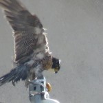 23-fledge-watch-wet-beauty-6-13-18