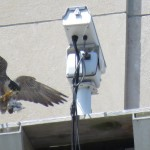 5-fledge-watch-beauty-6-10-18