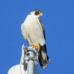 7-fledge-watch-dc-6-15-18