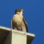 8-fledge-watch-beauty-6-14-18