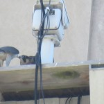 9-fledge-watch-dc-feeds-6-11-18