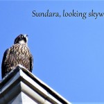 29-sundara-on-powers-7-29-18-2