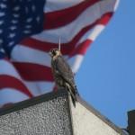 3-phoenix-and-flag-6-22-19