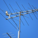 9-falcon-on-res-lab-antenna-10-13-19