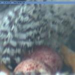 camera1_20080331-0834011.jpg