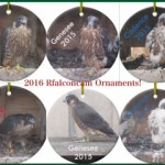 2015 Ornaments