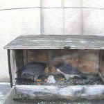 3 Hatches Feeding 5-2-17 MainCamera_20170502-061300