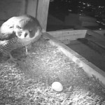 First Egg Camera3_20180327-061000