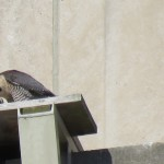 13-fledge-watch-all-five-6-16-18