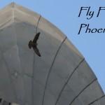 Fly Free Phoenix